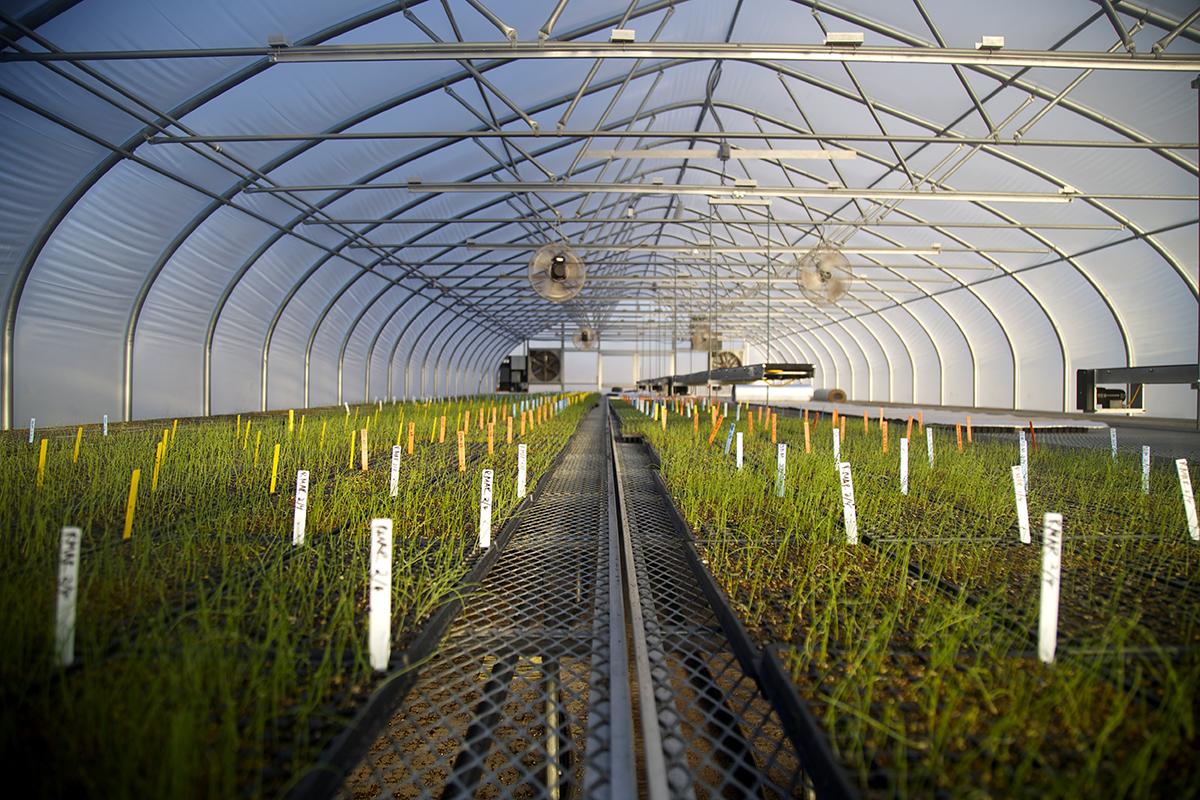 Profeta indoor farming